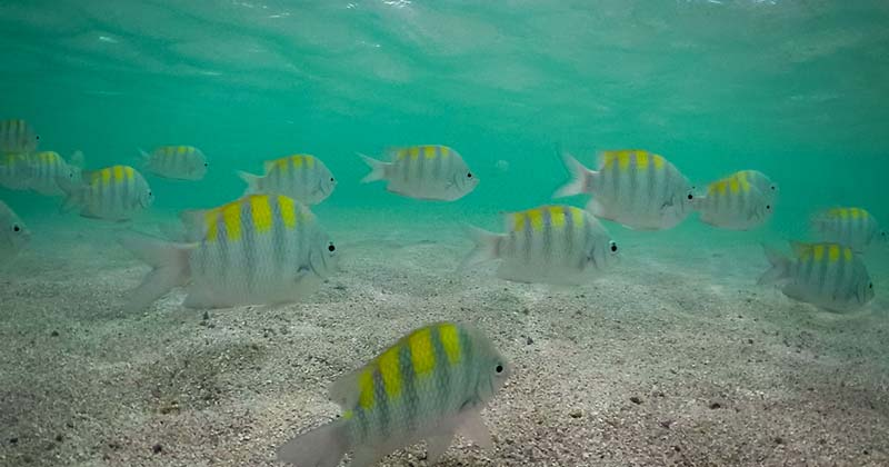Diving with colorful fishes